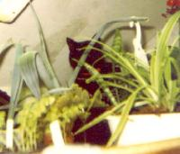Fuzzball-in-Rebeccas-Loft-Garden-02-19-1998 Thumbnail