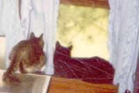 Gabby-Watching-Fuzzball-in-Window-05-01-1998 Thumbnail